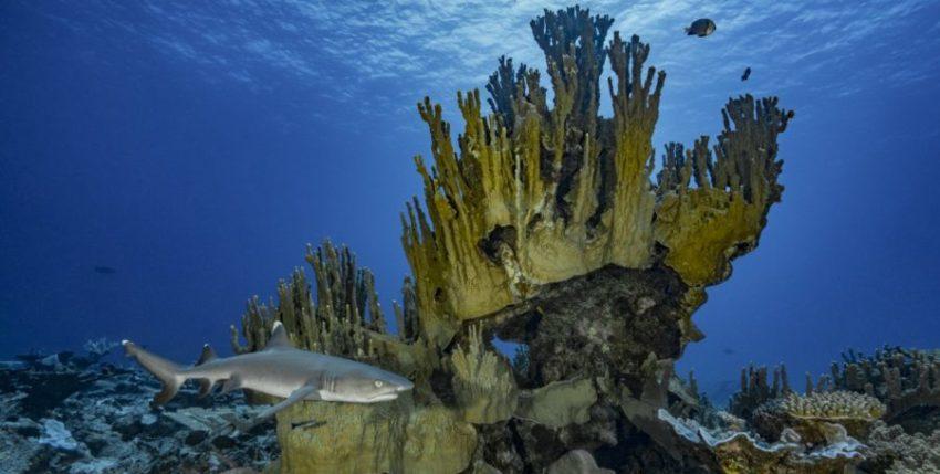 Non sprecare una crisi: un invito all'azione per gli oceani