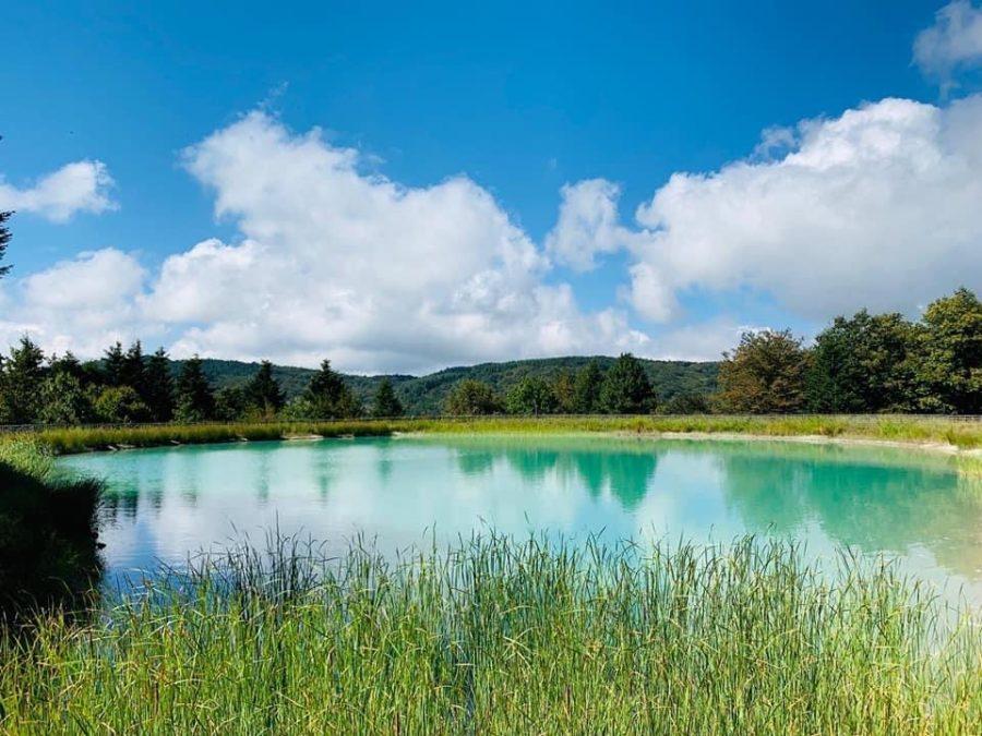 Lago-Acero