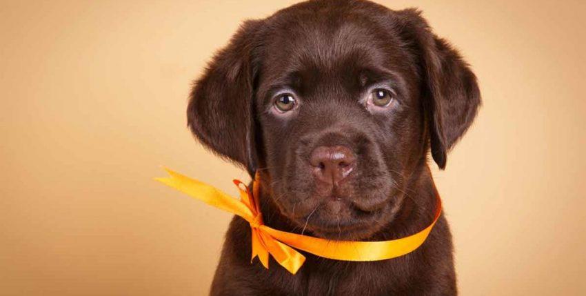 Storie di cani incredibili, alle quali non credevo